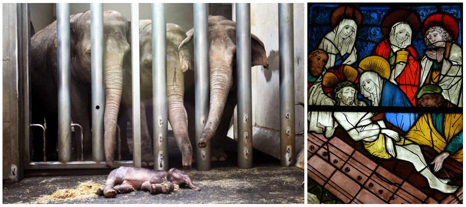 Afscheid: olifantje in dierentuin (foto: Leipzig Zoo), en begrafenis van Christus, glas-in-loodraam, Duitsland, 15e eeuw, Metropolitan Museum of Art, New York (foto: Ankie Lok)