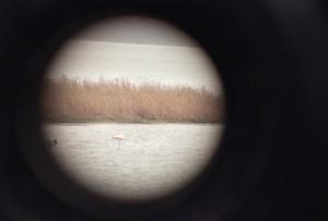 Flamingo_Durgerdam_Jupiter