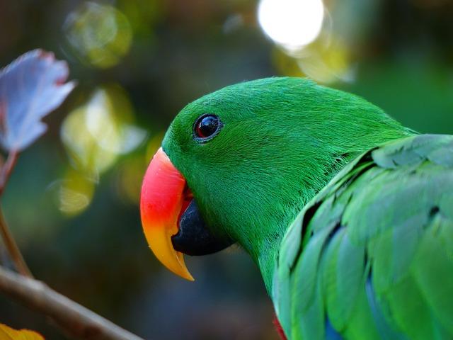 parrot-406668_640_Pixabay